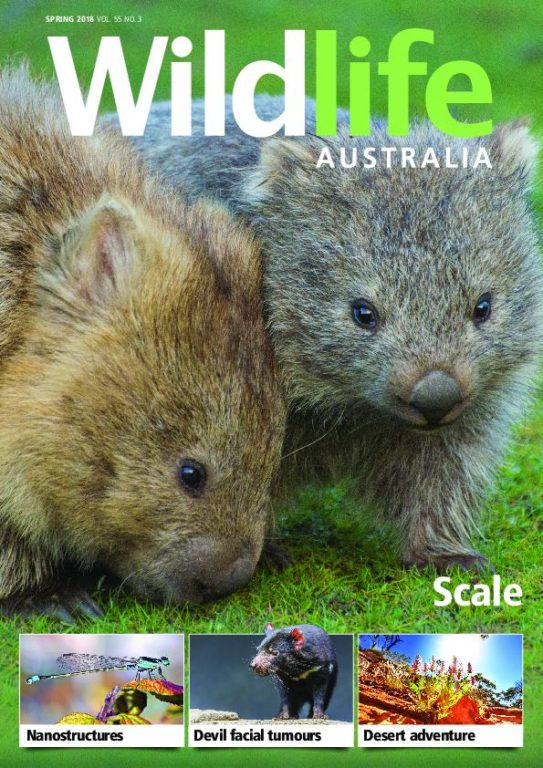 Wildlife Australia – September 2018